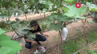 农村四哥:王四去陕西杨凌参观学习,见识了不一样的农产品技术