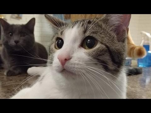 Kitten Close Up 2017-05-01