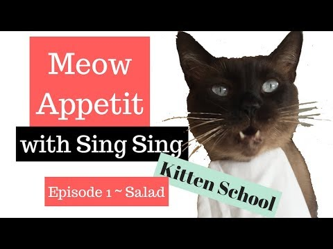 What Kind of Cat Eats SALAD? This Siamese does ! Meow Appetit!