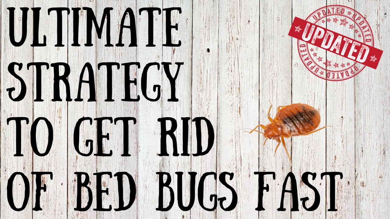 How To Get Rid Of Bed Bugs Yourself | Quick Tips For Killing Bed Bugs  Naturally   YouTube