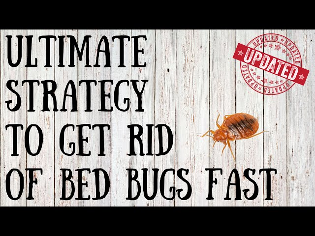 How To Deal With Bedbugs 9 Steps With Pictures Wikihow
