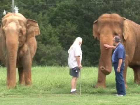Riddles Elephant and Wildlife Santuary