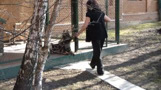 Охрана территории собакой. Дрессировка восточно-европейской овчарки http://dogclass.ru/