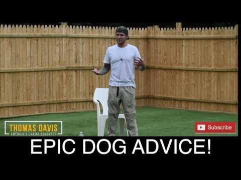 Create the perfect dog! - Dog Training Tips and tricks with America's Canine Educator