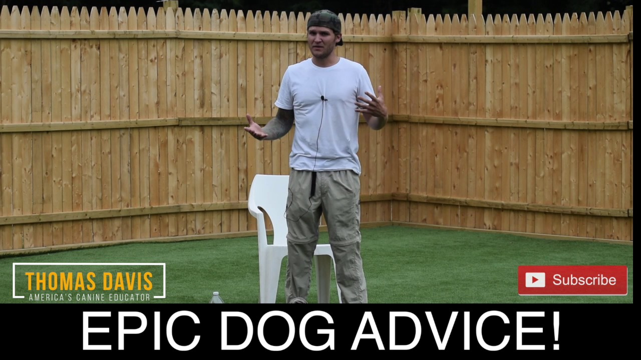 create the perfect dog dog training tips and tricks with