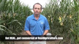 Wheat School - Why Red Clover is a No Brainer