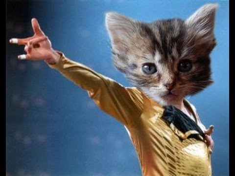 Cat in a bee costume moon walking to Michael Jackson- Thriller