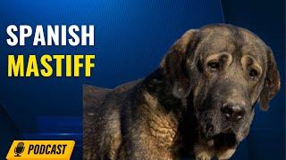 Episode 96: Spanish Mastiff - Laura Spindler from Hoof and Fang Spanish Mastiffs