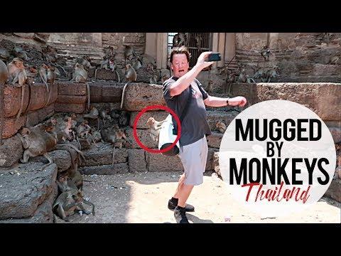 Mugged by Monkeys: Lopburi Monkey Temple Thailand
