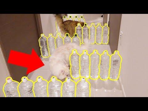 猫よけコースを廊下につくったら一瞬で攻略された・・・