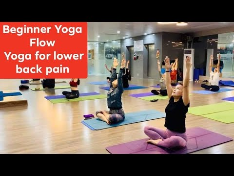 beginner yoga flow  yoga for lower back pain yoga for