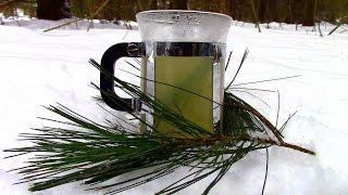 Wild Food Foraging- Pine Needle Tea