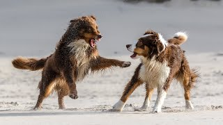 10 Most Energetic Dog Breeds Out There