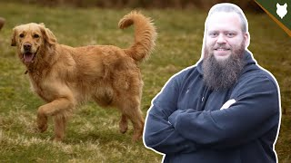 The Secret Trick To Teaching Your Dog PERFECT RECALL!
