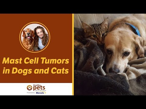 Mast Cell Tumor: A Common Form of Cancer in Dogs and Cats