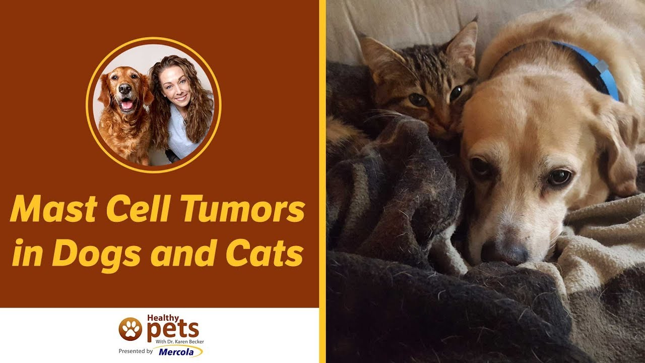 Mast Cell Tumors in Dogs and Cats