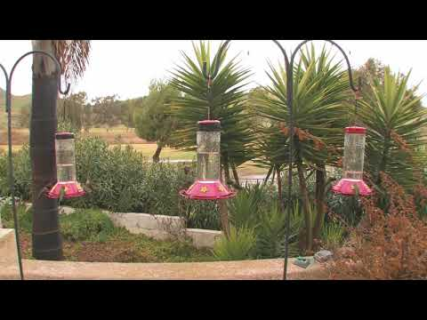 _Hummingbirds_at_3_Bird_Feeders!_(in_HD)Gameplay