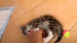 Отдадим котенка в добрые руки 1,5 месяца