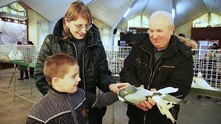 Выставка-ярмарка голубей и домашних животных. г.Пружаны.Беларусь