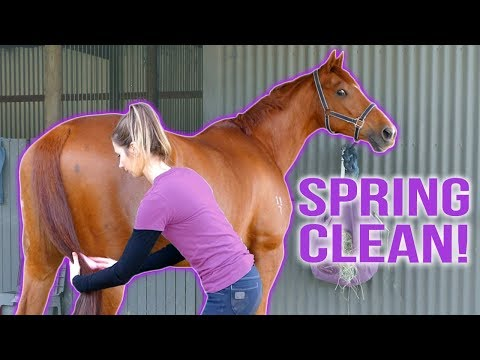 SPRING CLEAN | Stables, Tack & Horse!