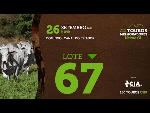 LOTE 67 - LEILÃO VIRTUAL DE TOUROS 2021 NELORE OL - CEIP