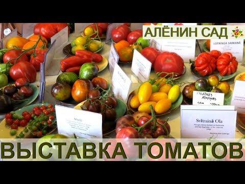 Выставка томатов - это взрыв мозга!!! / Лучшие сорта томатов от коллекционеров из Латвии