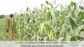 Témoignage El Hadj Mouhamed Diop, producteur maïs