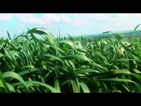 Feeding the Future (Yara Brand Video)