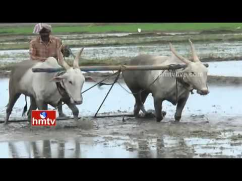 Agriculture Scientists Suggestions to Farmers Over Kharif Season Crops | Nela Talli | HMTV