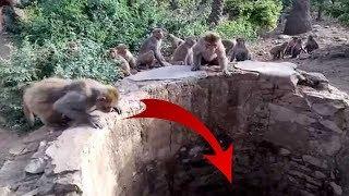 Warga Penasaran Banyak Monyet Melihat ke Bawah Sumur, Ternyata didalamnya Ada ini...