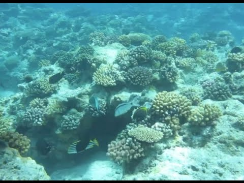 Ecological System of Coral Reef around Xisha Islands in Recovery: Expert