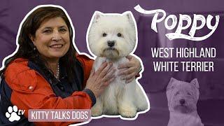 Grooming Poppy the senior West Highland White Terriër   Kitty Talks Dogs  TRANSGROOM