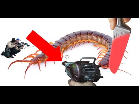 How to successfully remove a centipede from you current living quarters.