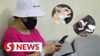 Broker claims trial to charge of injuring, killing cats in Seberang Jaya
