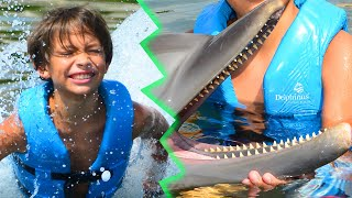 Baby Dolphin - Like Baby Shark but With Dolphins! | Swimming With Dolphins!