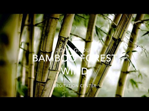 NATURE SOUNDS: Relaxing Nature Sound Of Bamboo In The Wind (No Music)