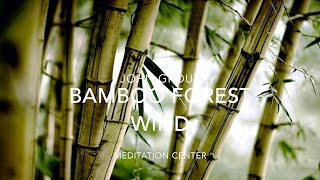 NATURE SOUNDS Relaxing Nature Sound Of Bamboo In The