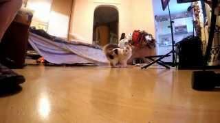 кошка в замедленной съемке