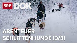 Abenteuer Schlittenhunde | Mit Huskys unterwegs in Finnisch Lappland (3/3) | Doku | SRF DOK