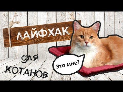 Гамак для кота на батарею своими руками