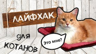 Как сделать батарейный гамак для кота своими руками? | sima-land.ru