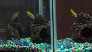 Please enjoy my hypnotic fish tank