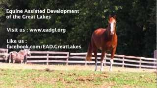 Equine Assisted Development