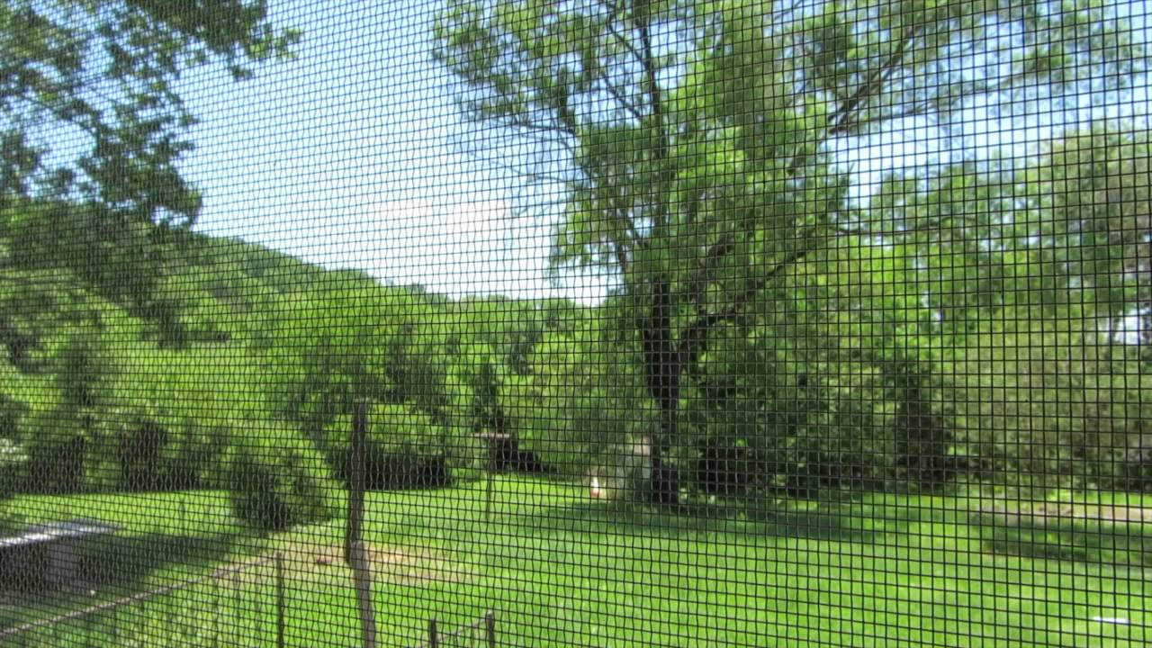 beautiful day in the backyard soothing wind sounds youtube