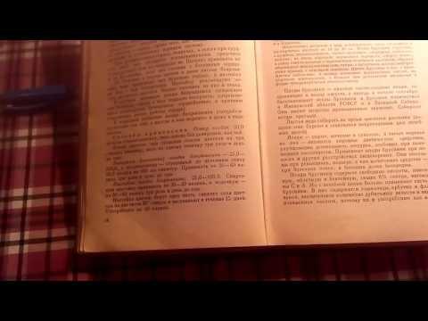Листья брусники, описание и лечебное применение