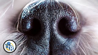 Why Do Dogs Smell Each Other's Butts? - Reactions