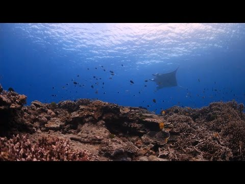 Managing and protecting Australia's Great Barrier Reef