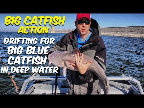 Catching Big Catfish: Drift Fishing For Big Blue Catfish In Deep Water