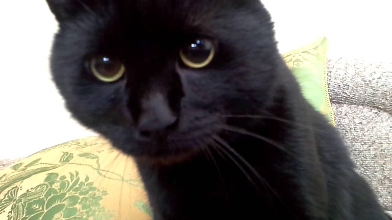 Потап кот