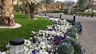 Египет территория отеля  Egypt Beach Hotel Queen Sharm Resort